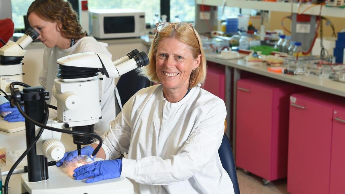 Giáo sư Melissa Little, Viện Nghiên cứu trẻ em Murdoch, Australia. Ảnh Herald Sun.