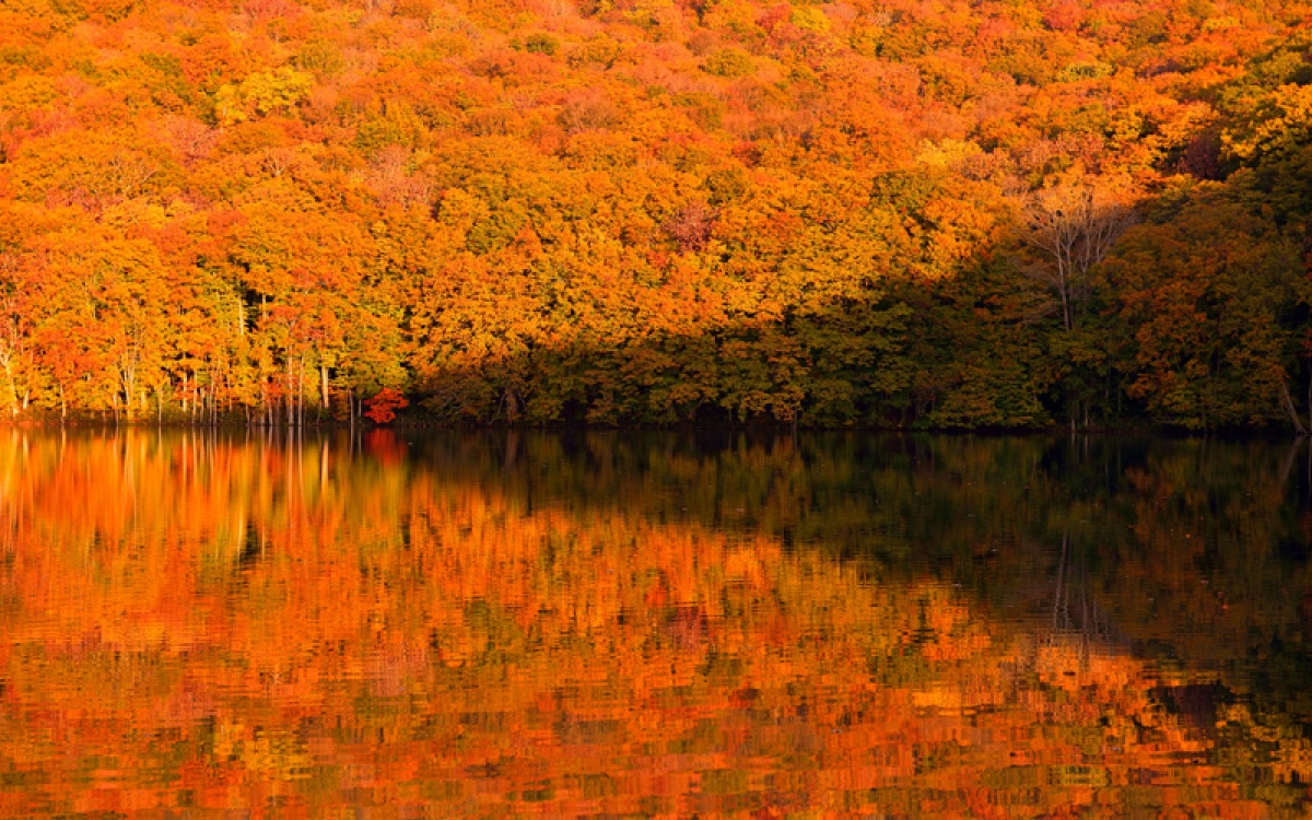 Nước hồ trong vắt như gương phản chiếu thảm rừng gỗ sồi vàng đỏ rực (Ảnh: amori.com)