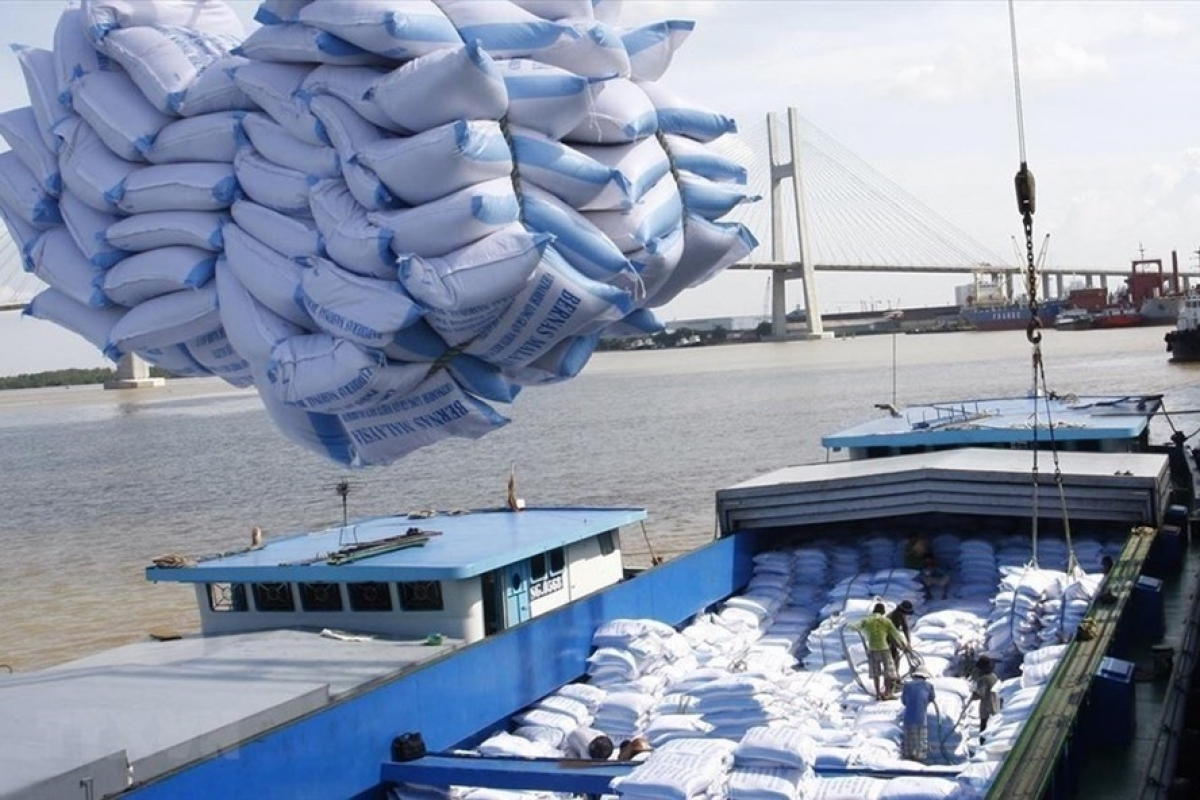 Rice is one of Vietnam's major agricultural products for export to the EU (Photo: VNA)