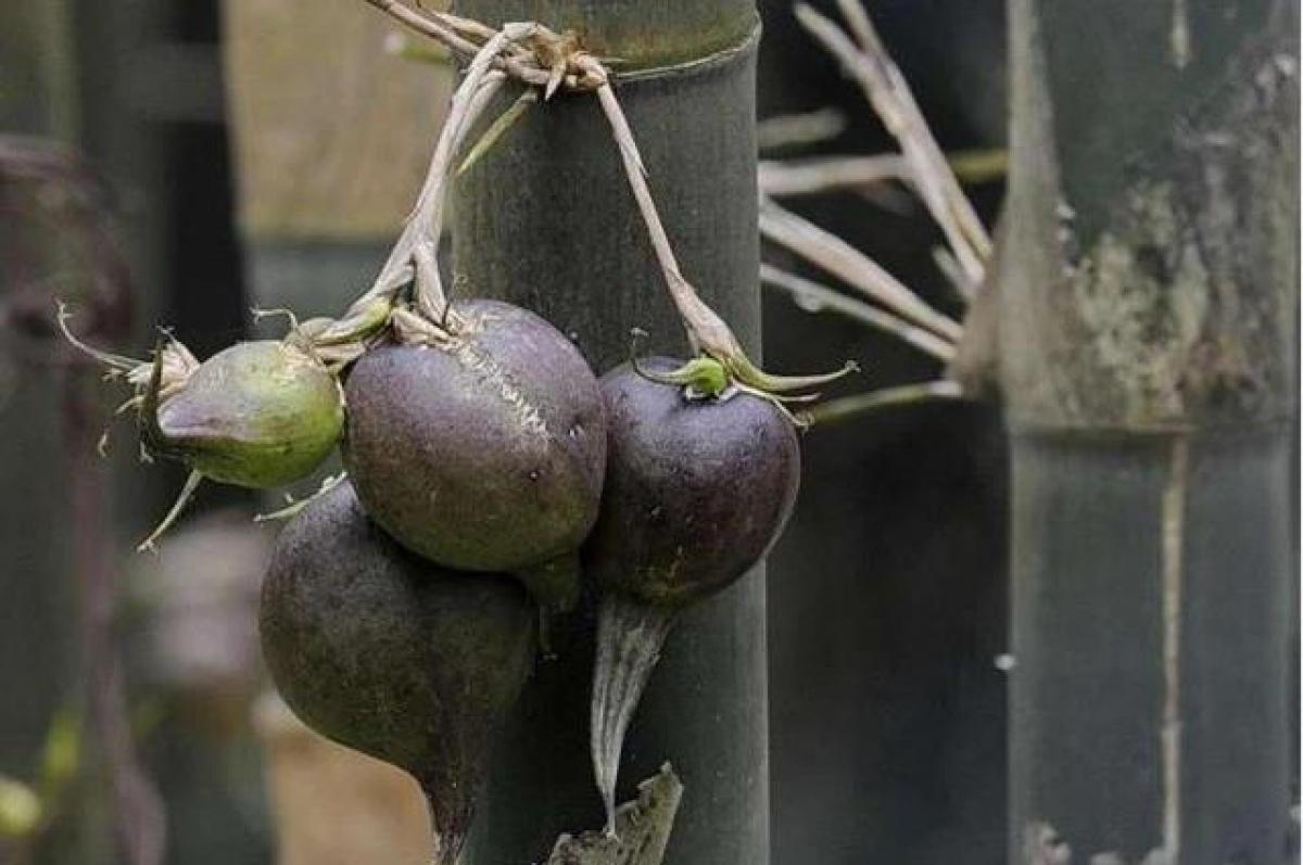 Đây là 1 loại trái cây đắt đỏ (nhất là ở Trung Quốc).