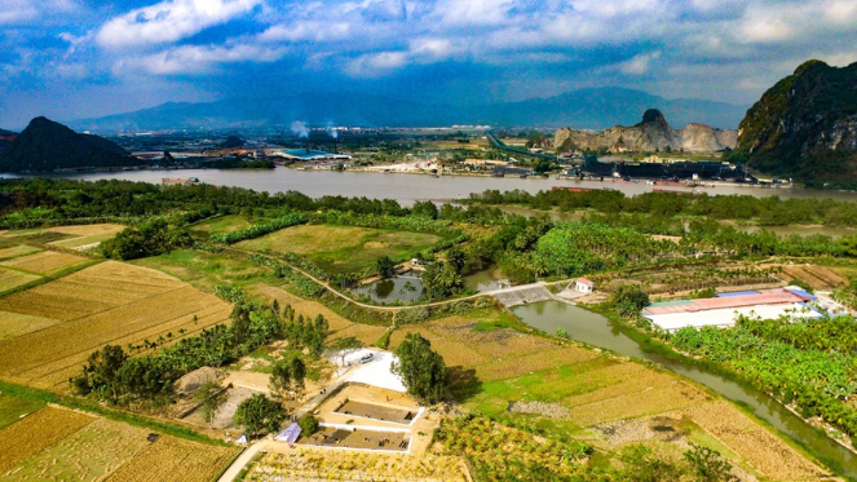 Dự án Khu bảo tồn bãi cọc Cao Quỳ (Ảnh minh họa: KT)