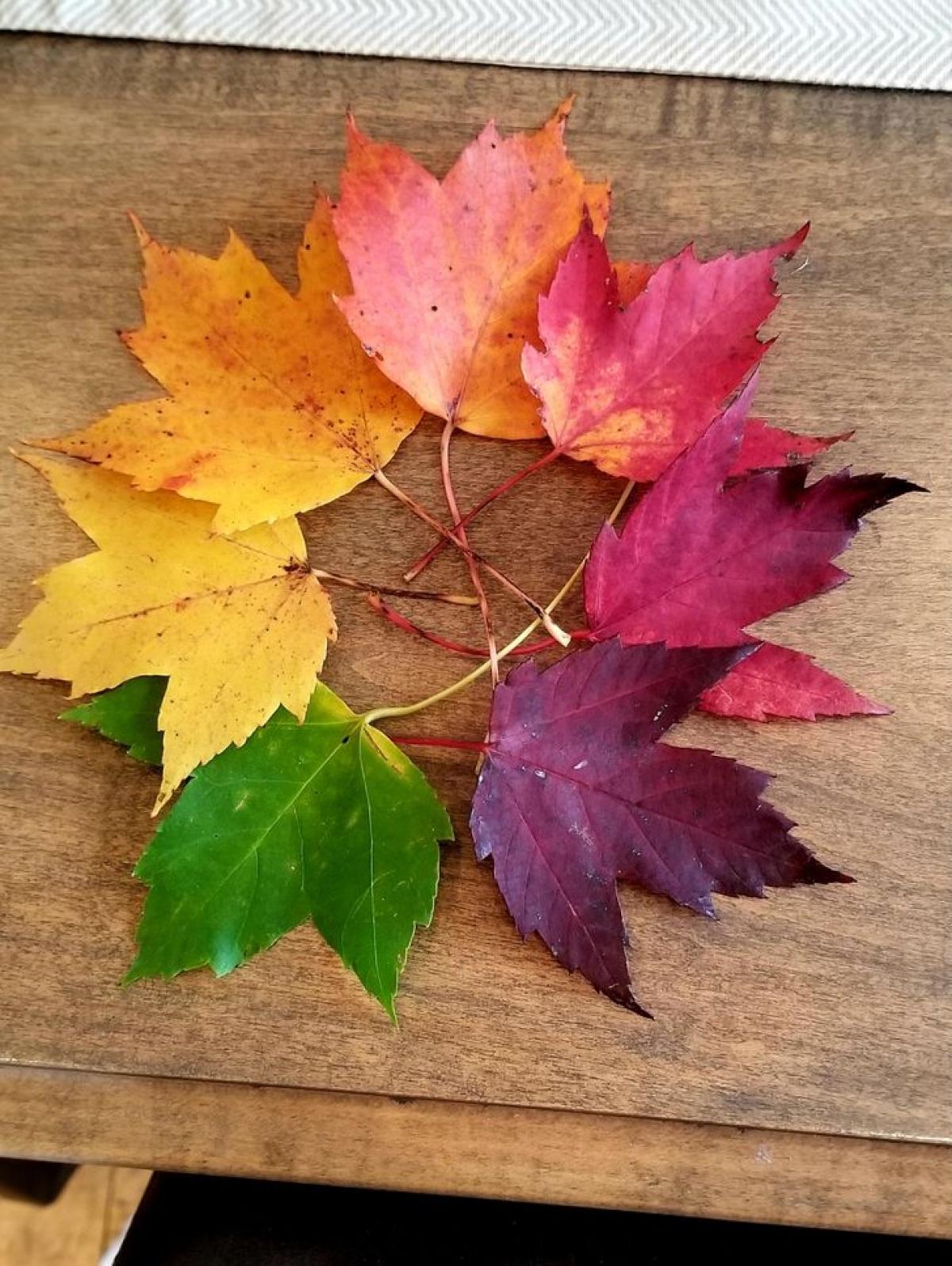 Tin được không? Đây là những chiếc lá phong đủ sắc màu tôi vô tình lượm được ở khu rừng gần nhà.