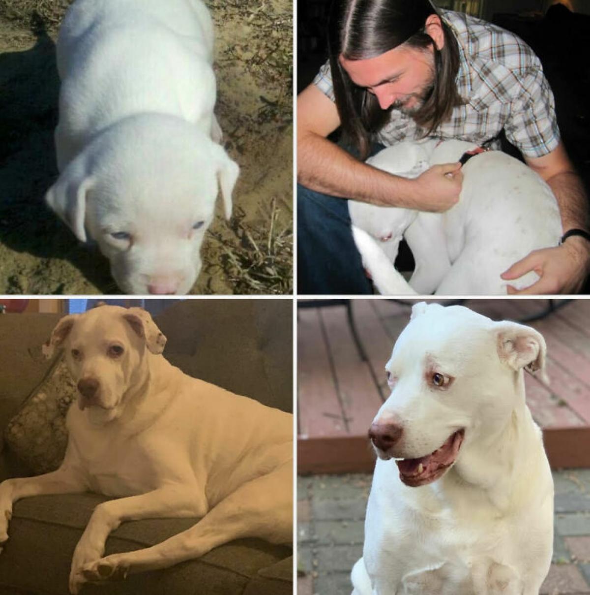 Buddy bị mù, điếc. Sau khi được giải cứu, chú chuyển về sống cùng chúng tôi. Thấm thoắt đã 10 năm trôi qua, chúc mừng sinh nhật Buddy!