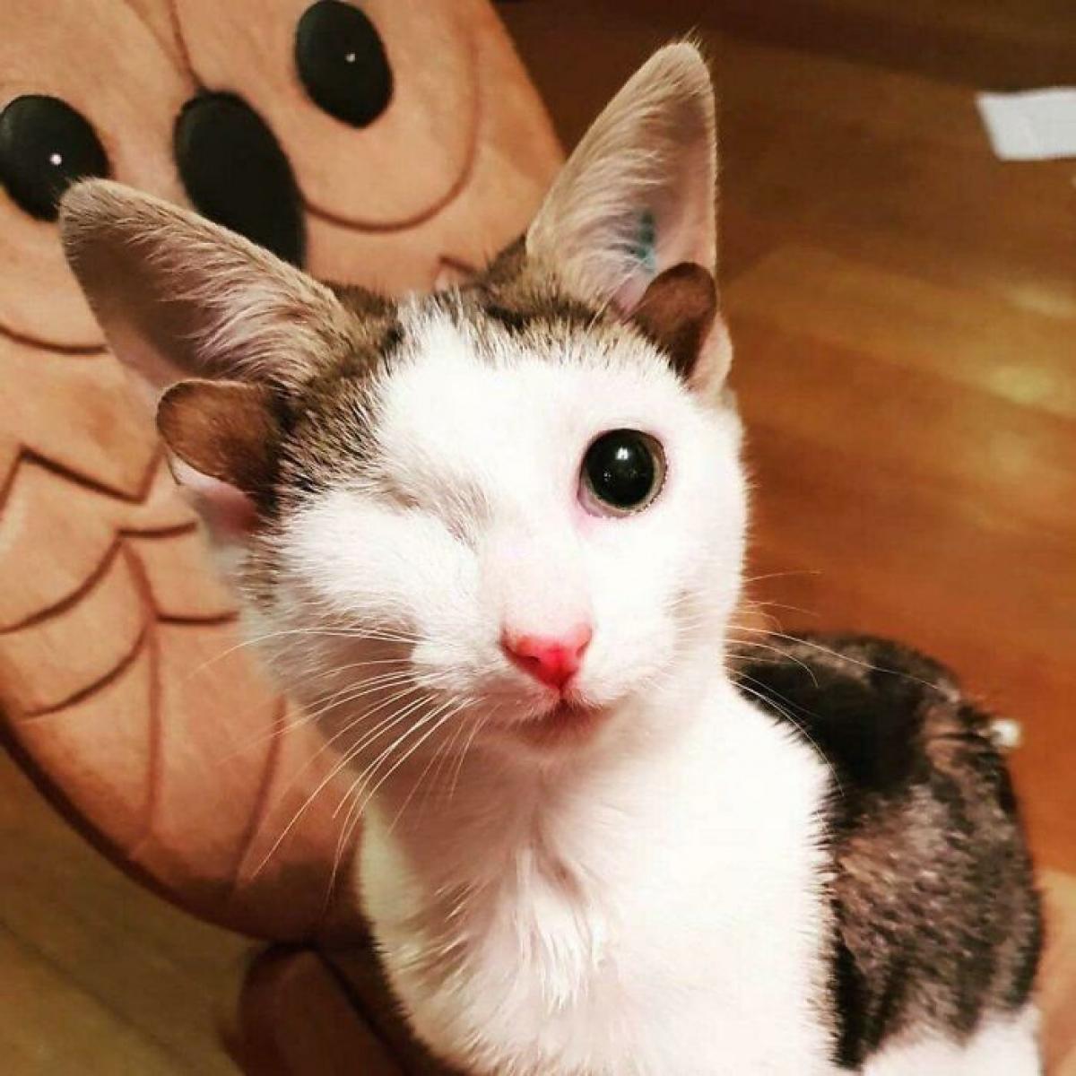 Chú mèo Frankie chỉ có một mắt và có tới 4 tai, nhưng với chúng tôi, nó luôn luôn hoàn hảo.