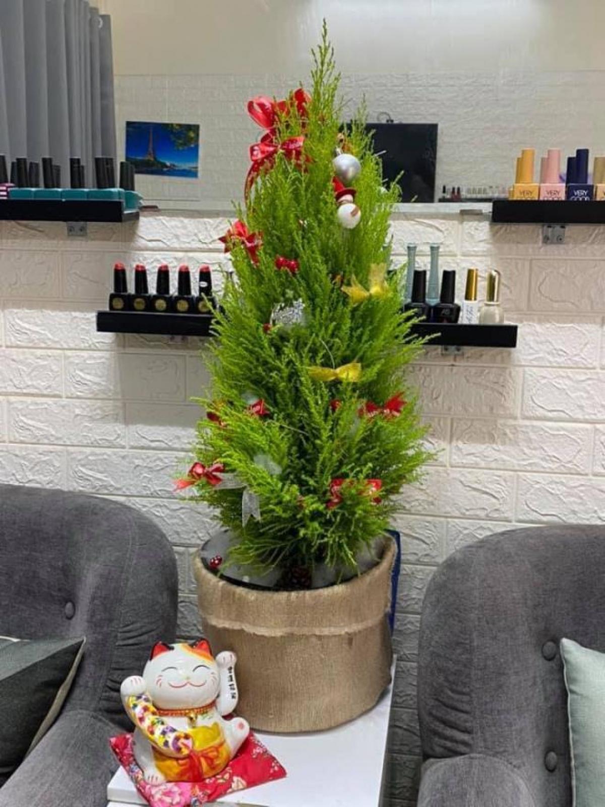 """Bên cạnh cây thông tươi, năm nay, nhiều khách hàng chuyển sang dùng tùng thơm để trang trí Giáng sinh với giá """"mềm"""" hơn rất nhiều. (Ảnh: VTC News)"""