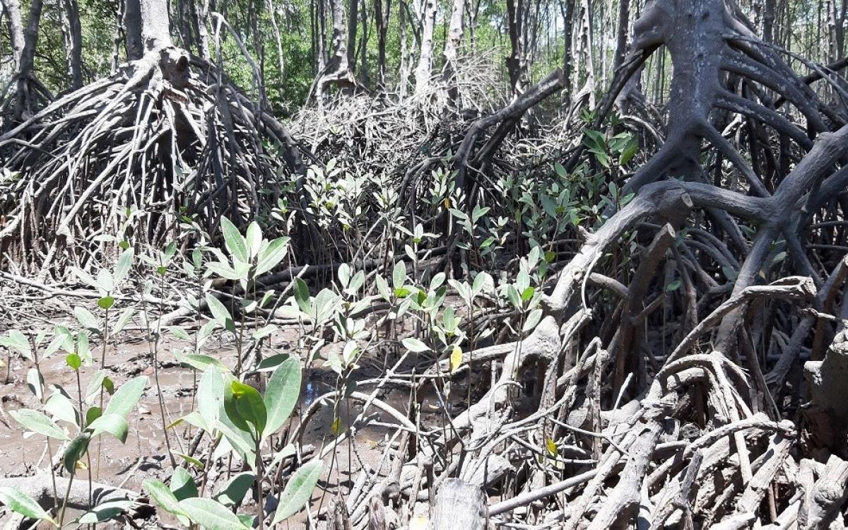 Nhiều cánh rừng chặt thưa trái phép(Ảnh người dân cung cấp)