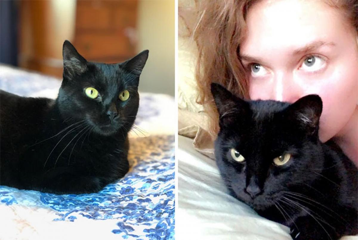 Khi chú mèo thân yêu của tôi mất, tôi đến trạm cứu hộ và nói với nhân viên rằng tôi muốn nhận nuôi chú mèo sống ở đây lâu nhất. Nhân viên cứu hộ đã hỏi đi hỏi lại với tôi rằng có chắc chắn muốn nhận nuôi chú mèo đen này không?