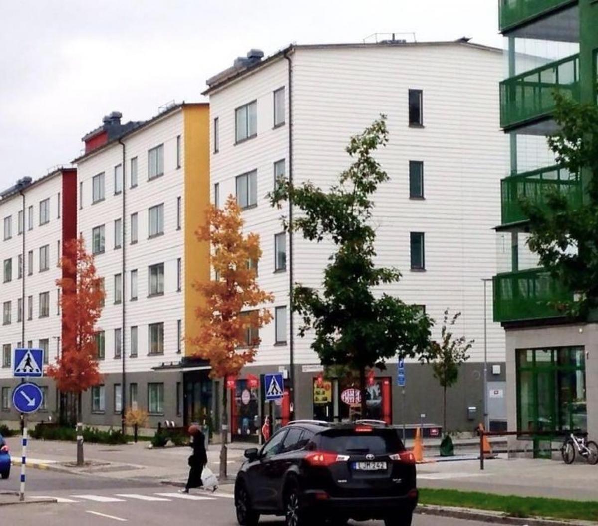 Những cây thông đổi sắc màu trên đường phố./.