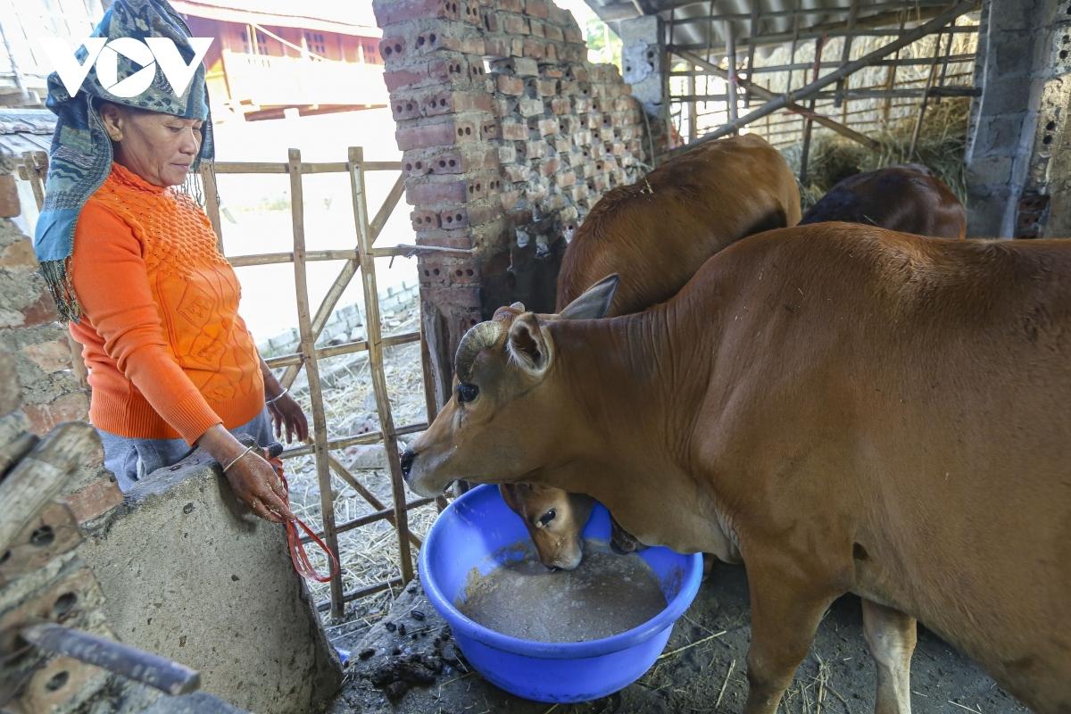Người dân SaPa tăng cường phòng chống rét cho đàn gia súc