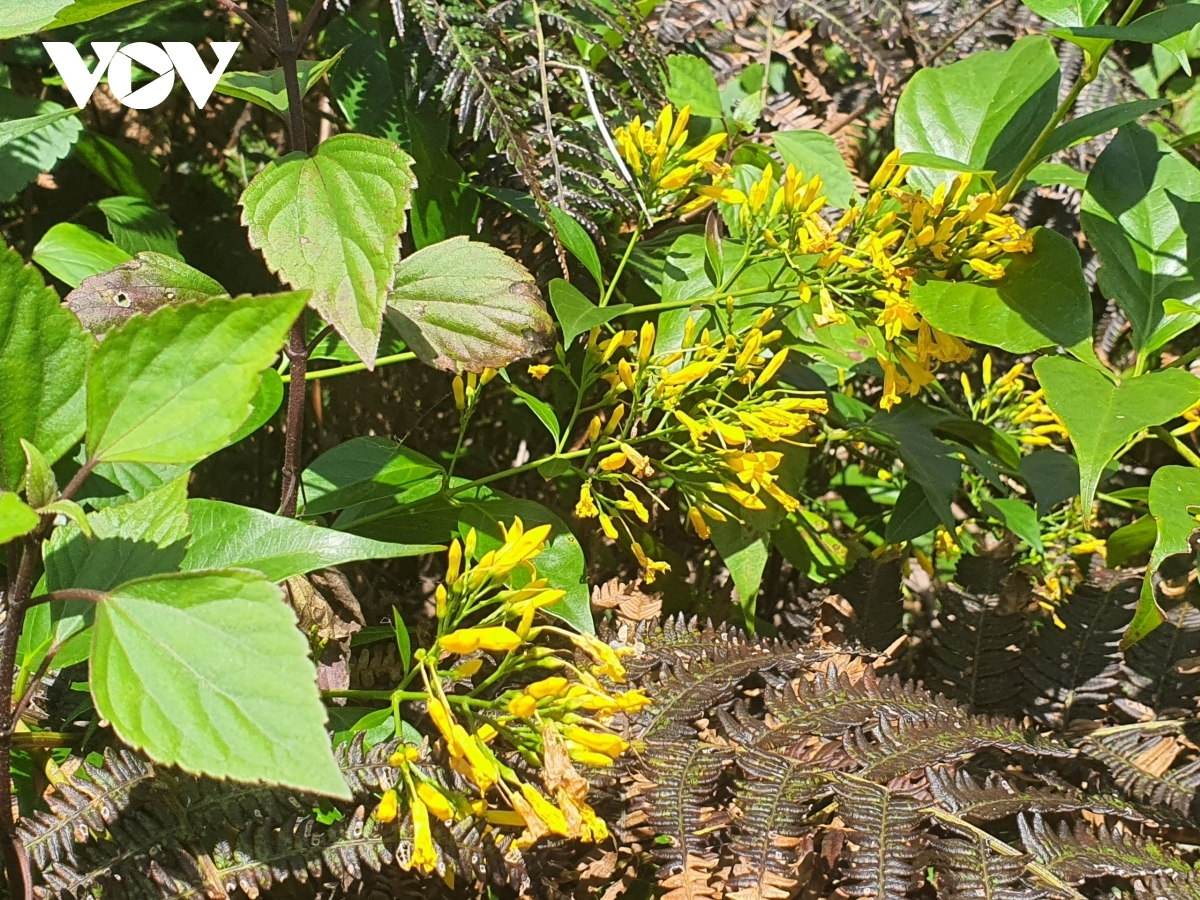 There are plenty of varieties of weeds and colourful flowers that travelers can enjoy seeing whilst trekking up the path.