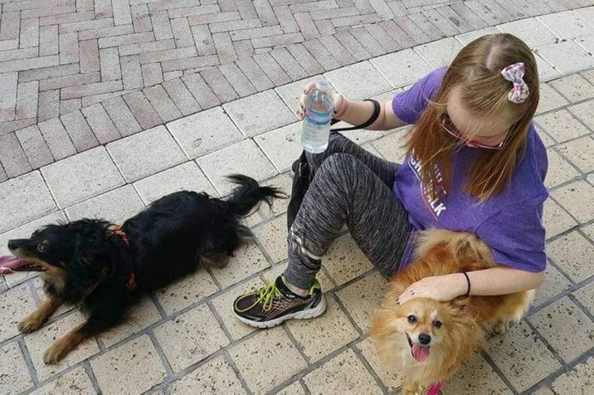 Hai chú chó nghỉ ngơi trong lúc đưa cô bé mắc chứng Down đi dạo.