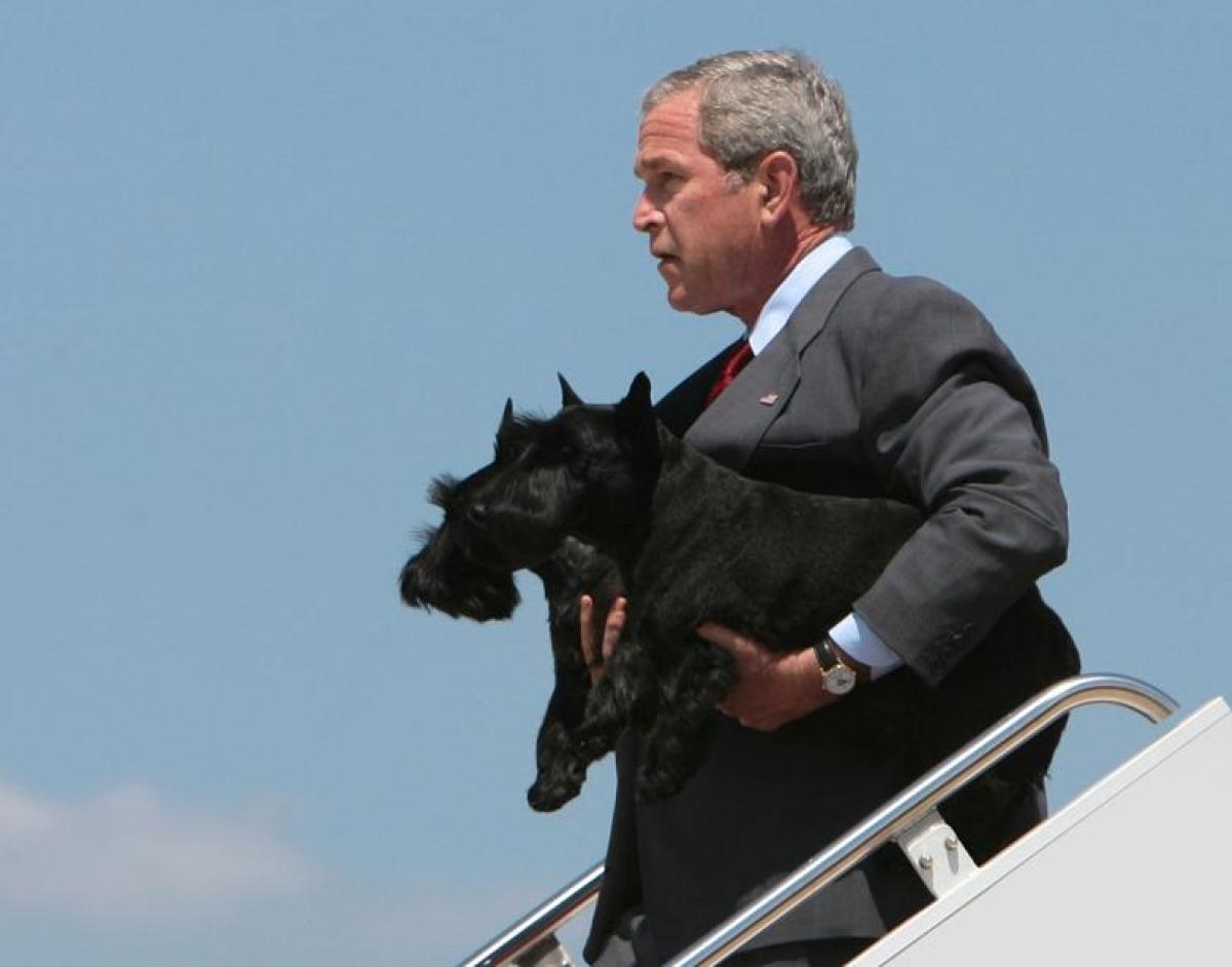 Tổng thống George W. Bush bế 2 chú chó Barney và Miss Beazley, bước xuống từ chuyên cơ Không Lực Một ngày 13/8/2006.