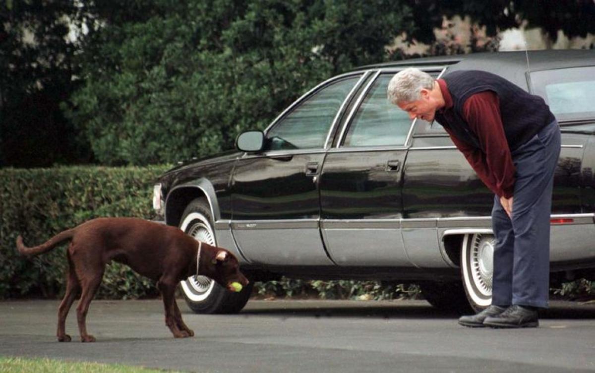Ngoài chú mèo Socks, Tổng thống Bill Clinton còn nuôi một chú chó tha mồi Labrador tên Buddy trong Nhà Trắng.