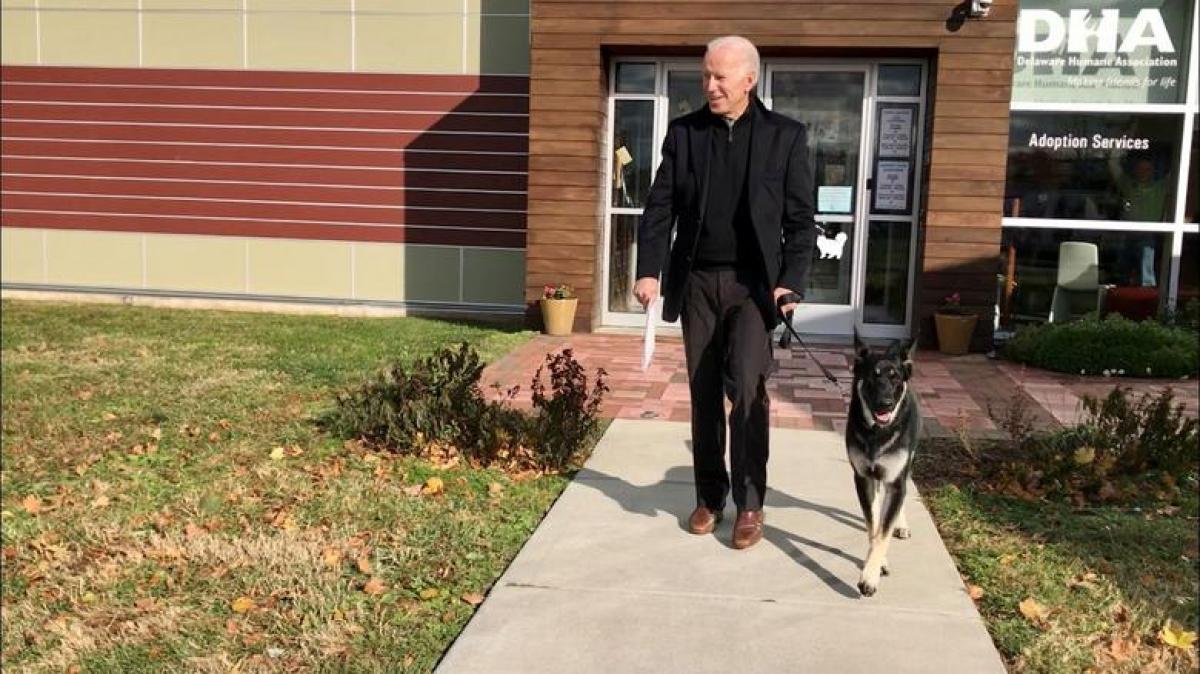 """Sau 4 năm vắng bóng, Nhà Trắng sẽ lại đón """"đệ nhất thú cưng"""" khi tân Tổng thống Joe Biden đưa 2 chú chó Major (trong ảnh) và Champ tới đây./."""