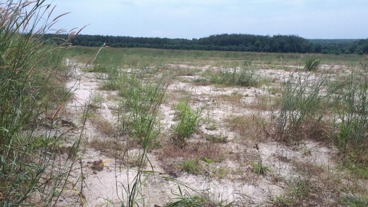 Đến nay dự án Thành Phát City 1 vẫn chỉ là bãi đất trống.