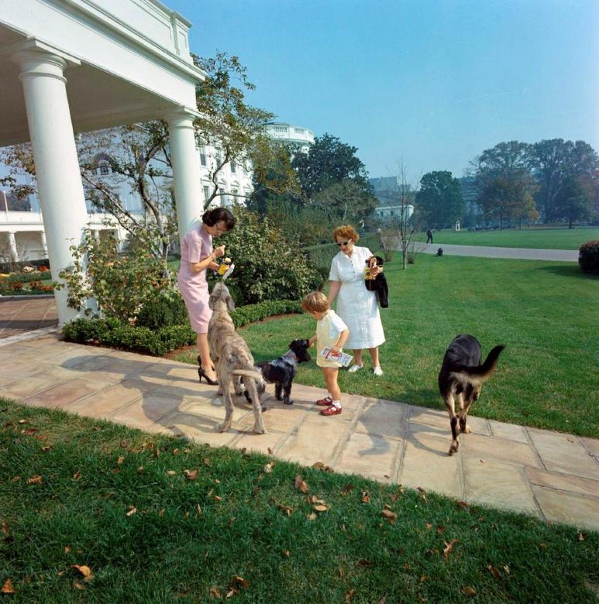 Từ trái sang phải là ba chú chó Wolf (trái), Shannon và Clipper của gia đình Tổng thống John F. Kennedy (1963).