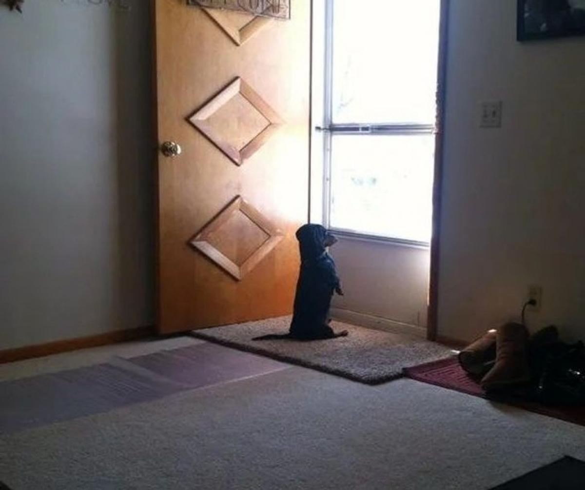 Hình ảnh thường thấy của cún con mỗi ngày ngóng chủ đi làm về.