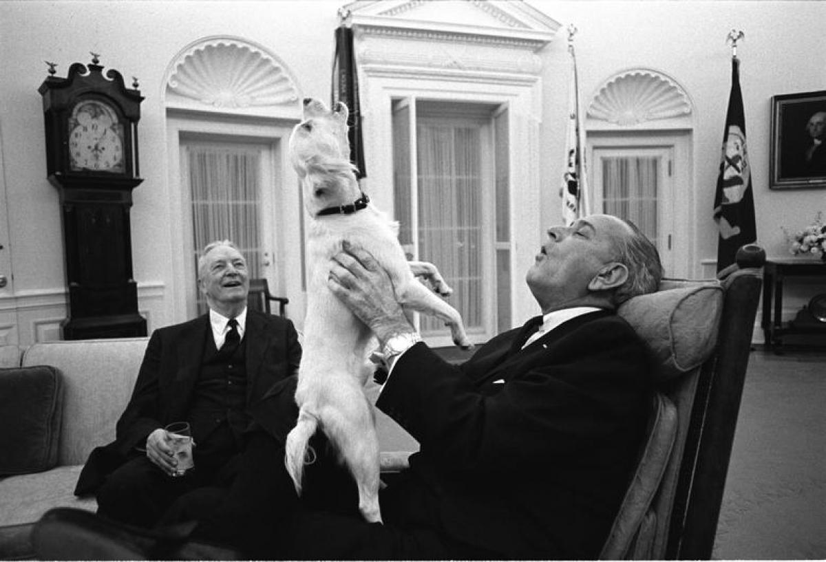 Tổng thống Lyndon B. Johnson chơi đùa cùng chú chó Yuki tại phòng Bầu dục năm 1968.