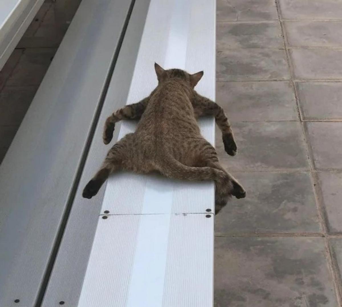Tư thế ngủ độc nhất vô nhị của mèo con.