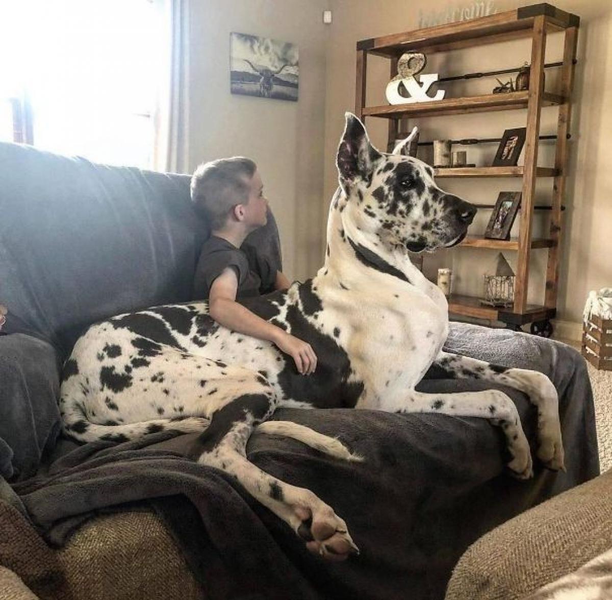"""Chú chó này là thành viên """"bự"""" nhất trong gia đình chúng tôi."""