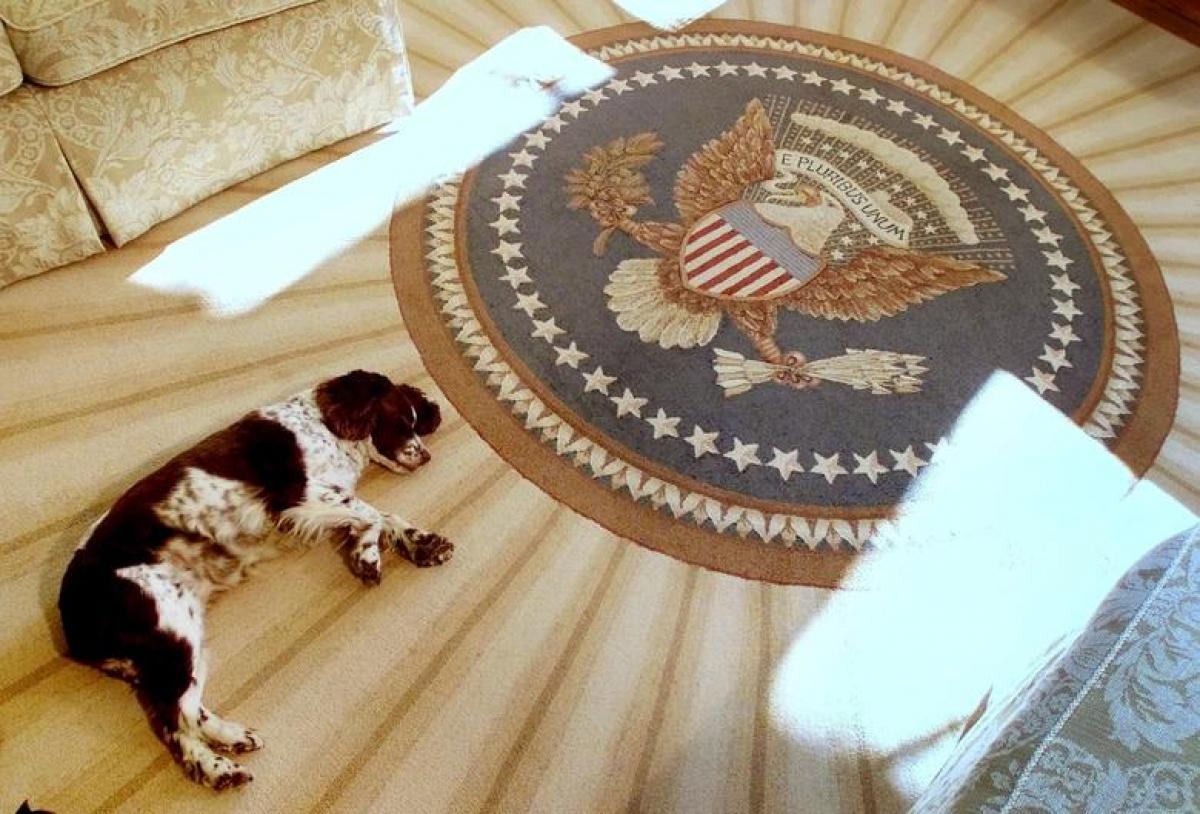 Spot, chú chó cưng của gia đình Tổng thống George W. Bush và Đệ nhất phu nhân Laura, đang nằm ngủ trên sàn phòng Bầu dục, ngày 20/12/2001.