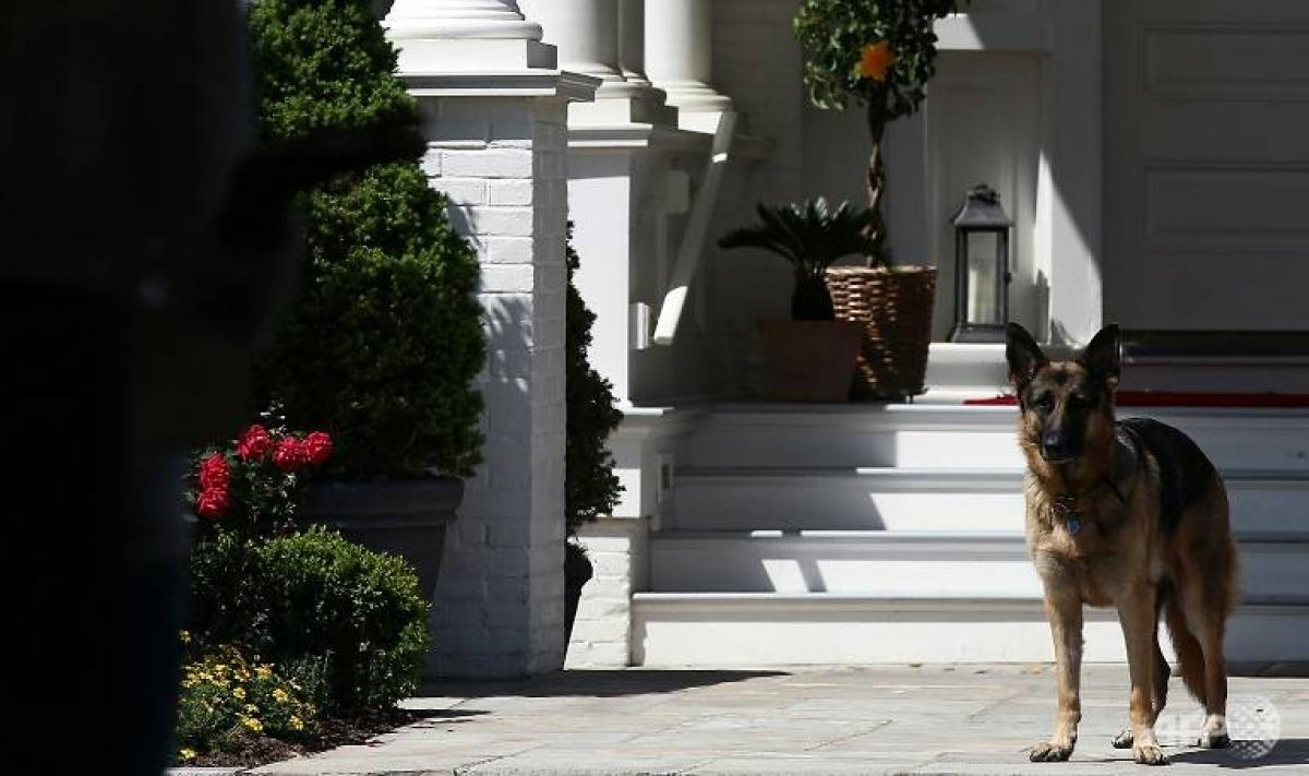 Chú chó chăn cừu Đức Champ. Ảnh: AFP