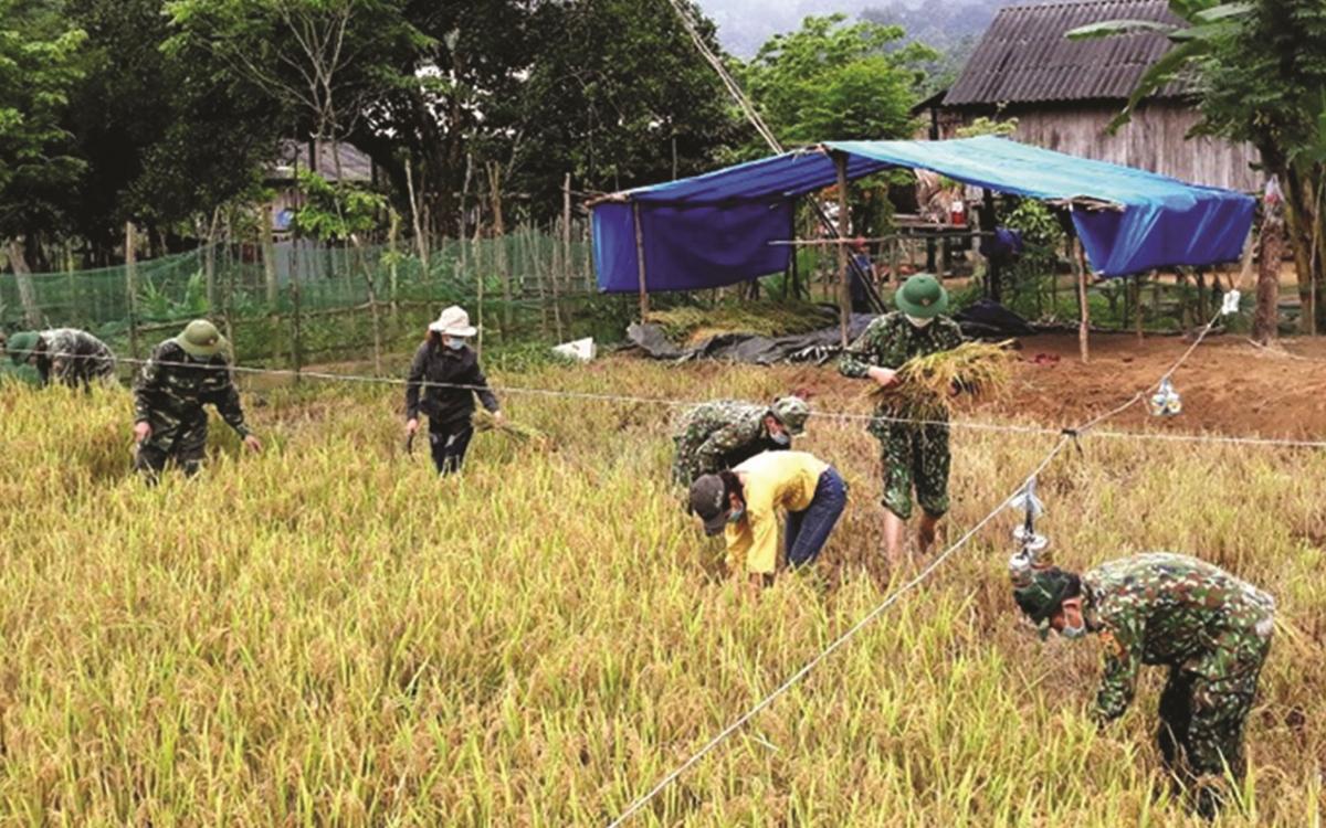 Bộ đội Biên phòng Đồn Làng Ho, huyện Lệ Thủy giúp dân thu hoạch lúa. (Ảnh minh họa, nguồn: báo Quảng Bình).