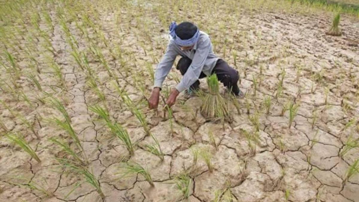 Tình hình hạn hán tại Campuchia.