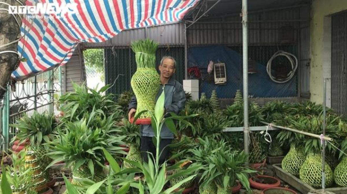 Từ cây phát lộc, người dân Thái Bình tạo ra những sản phẩm độc lạ, hút mắt khách hàng, có thời điểm không có cây để bán, thu về hàng chục triệu đồng.