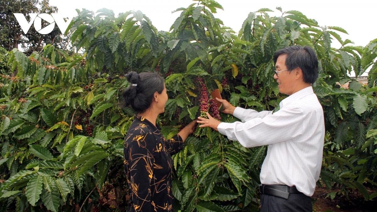 Xuất khẩu cà phê trong năm 2021, tận dụng lợi thế từ EVFTA khi thuế xuất về 0%.