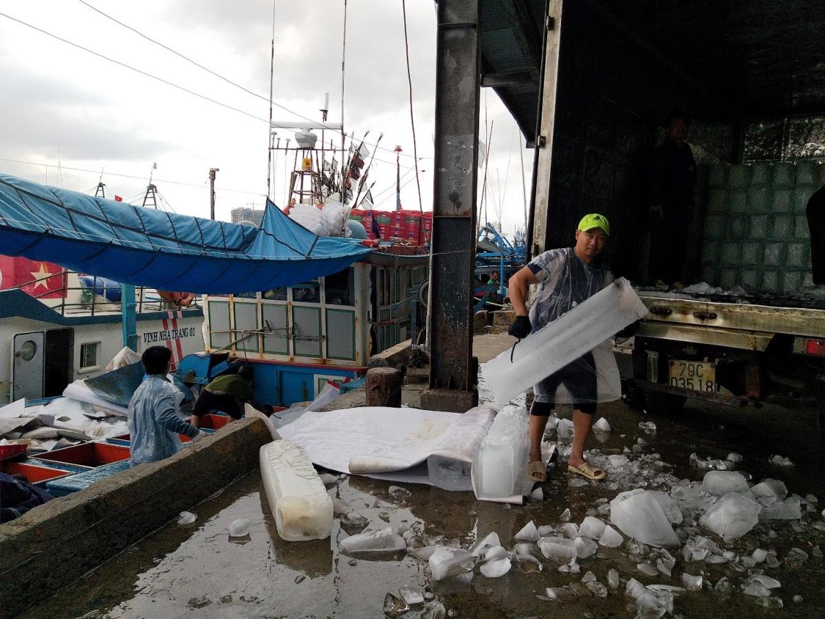 Đến nay vẫn còn nhiều tàu cá tại Khánh Hòa chưa được cấp Giấy chứng nhận an toàn thực phẩm.