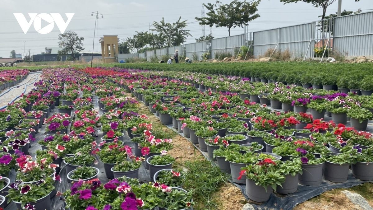 A pot containing other flowers costs between VND20,000 and VND25,000.