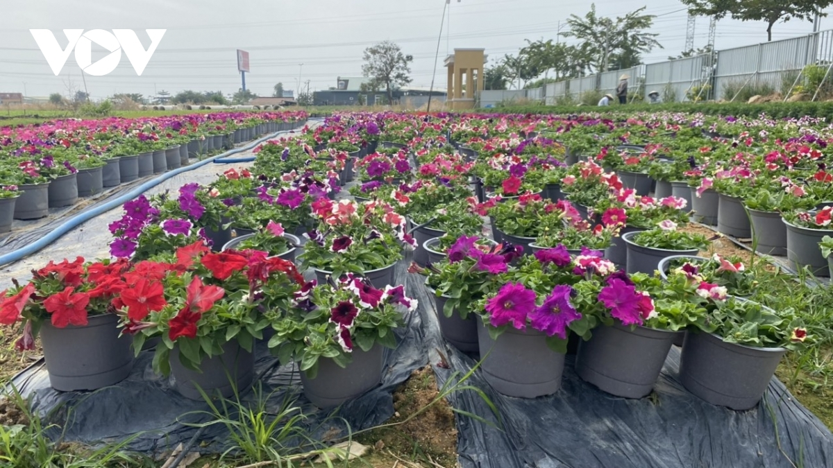This year will see the village supply 20 different types of flowers to the market.