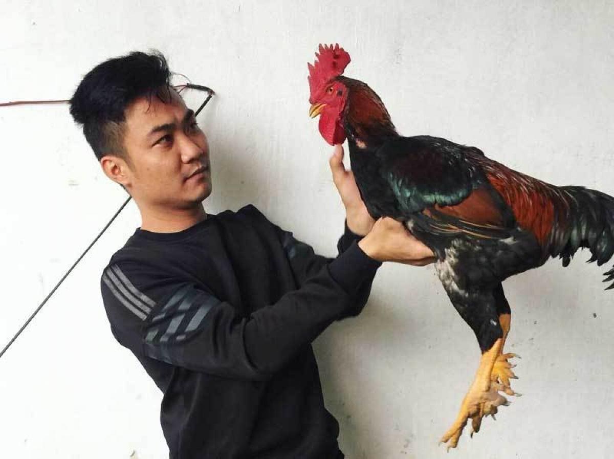 Nhờ nuôi gà chín cựa, anh Khánh lãi khoảng 300 triệu đồng.
