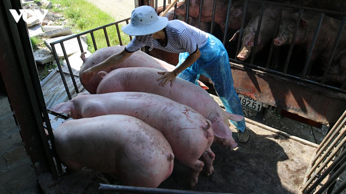 Bình ổn giá thịt lợn dịp cuối năm.