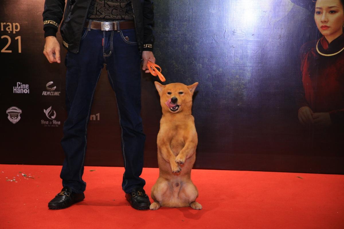 """Bên cạnh dàn nghệ sĩ từ gạo cội tới diễn viên trẻ, """"nghệ sĩ"""" được quan tâm nhất trong dàn cast """"Cậu Vàng"""" chính là chú chó đóng vai chính. """"Cậu Vàng"""" nhận được sự quan tâm đặc biệt của cả ê kíp sản xuất lẫn khách mời tới lễ công chiếu."""