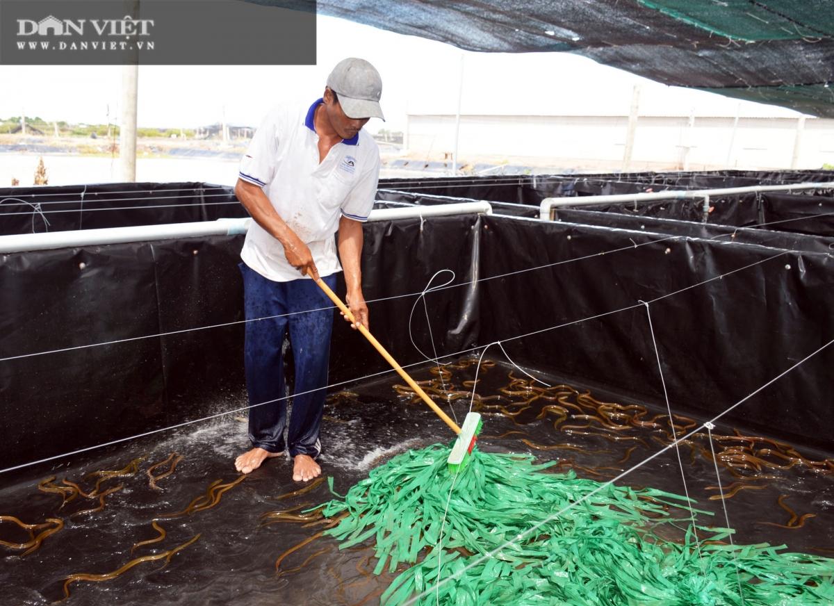 Với cách nuôi lươn không bùn công nghệ cao, tuần hoàn nước, anh Phan Khắc Nhật Tiến (ngụ phường 5, TP Bạc Liêu, tỉnh Bạc Liêu) giảm được chi phí chăm sóc. (Ảnh: Chúc Ly)