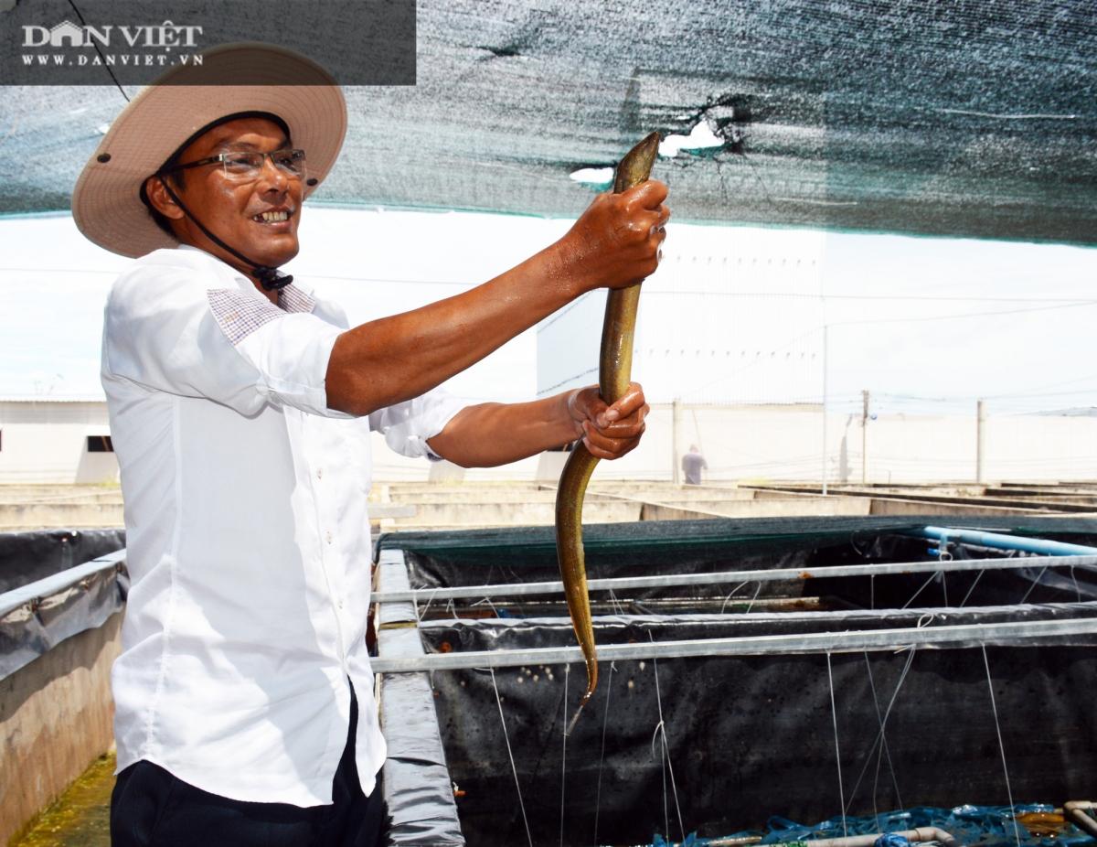 Đồng thời, con lươn phát triển nhanh, ít dịch bệnh. (Ảnh: Chúc Ly)