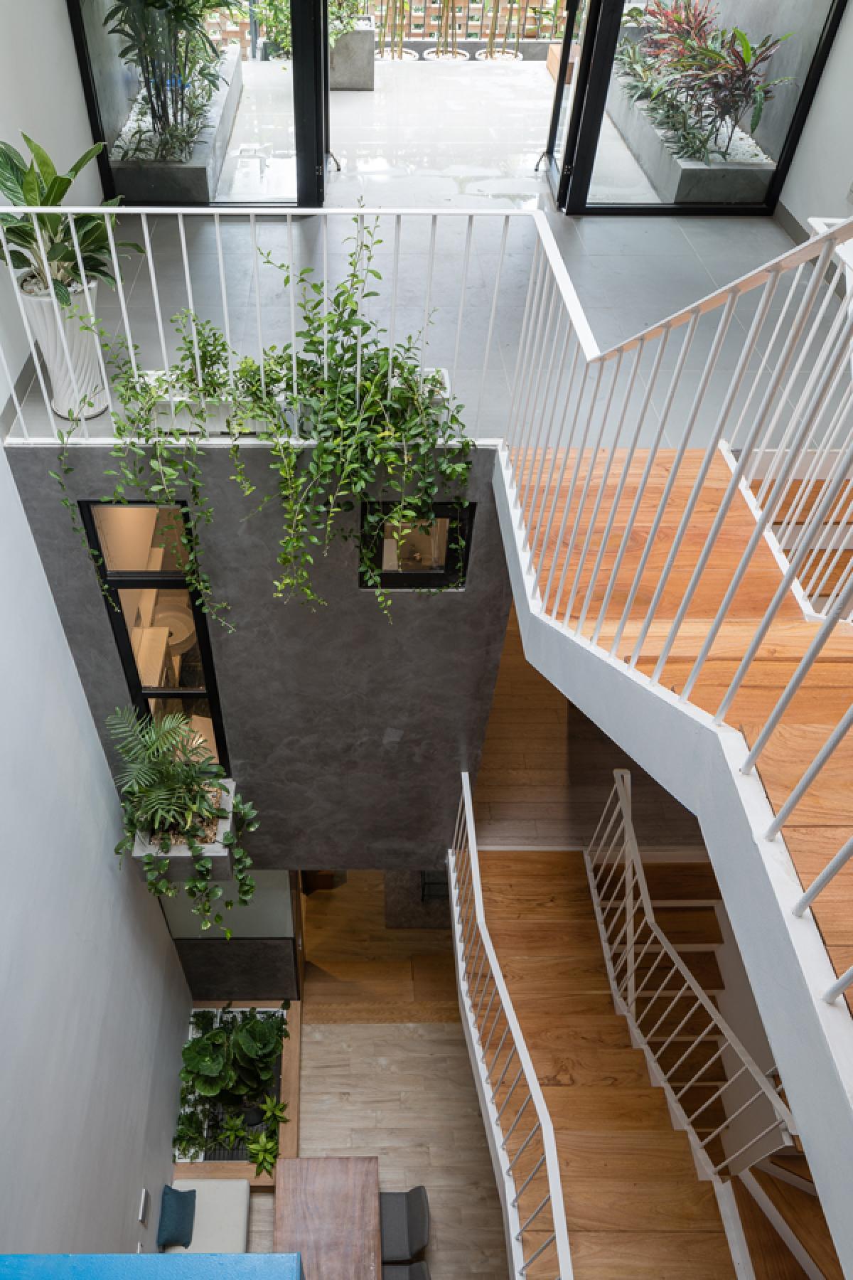 Giếng trời nằm giữa nhà bên cạnh cầu thang là một điểm nhấn của không gian và cũng là một giải pháp thông gió, lấy sáng hữu hiệu. Cây xanh hiện diện nhiều nơi ở nơi này tạo sự xanh mát trong nội thất.