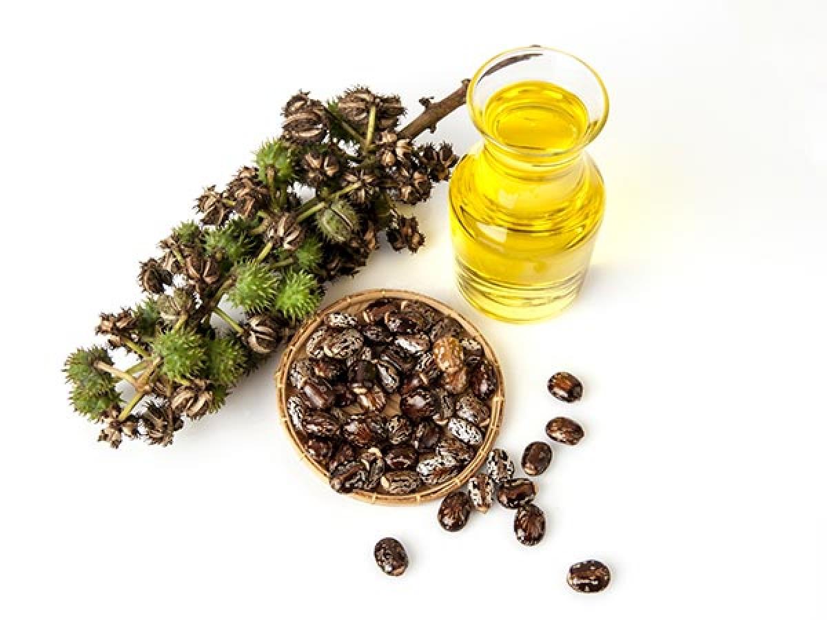 Dầu thầu dầu (Castor oil): Dầu thầu dầu có thể hỗ trợ điều trị u nang buồng trứng và u xơ tử cung. Axit ricinoleic có trong dầu thầu dầu cũng giúp tăng cường hệ miễn dịch.