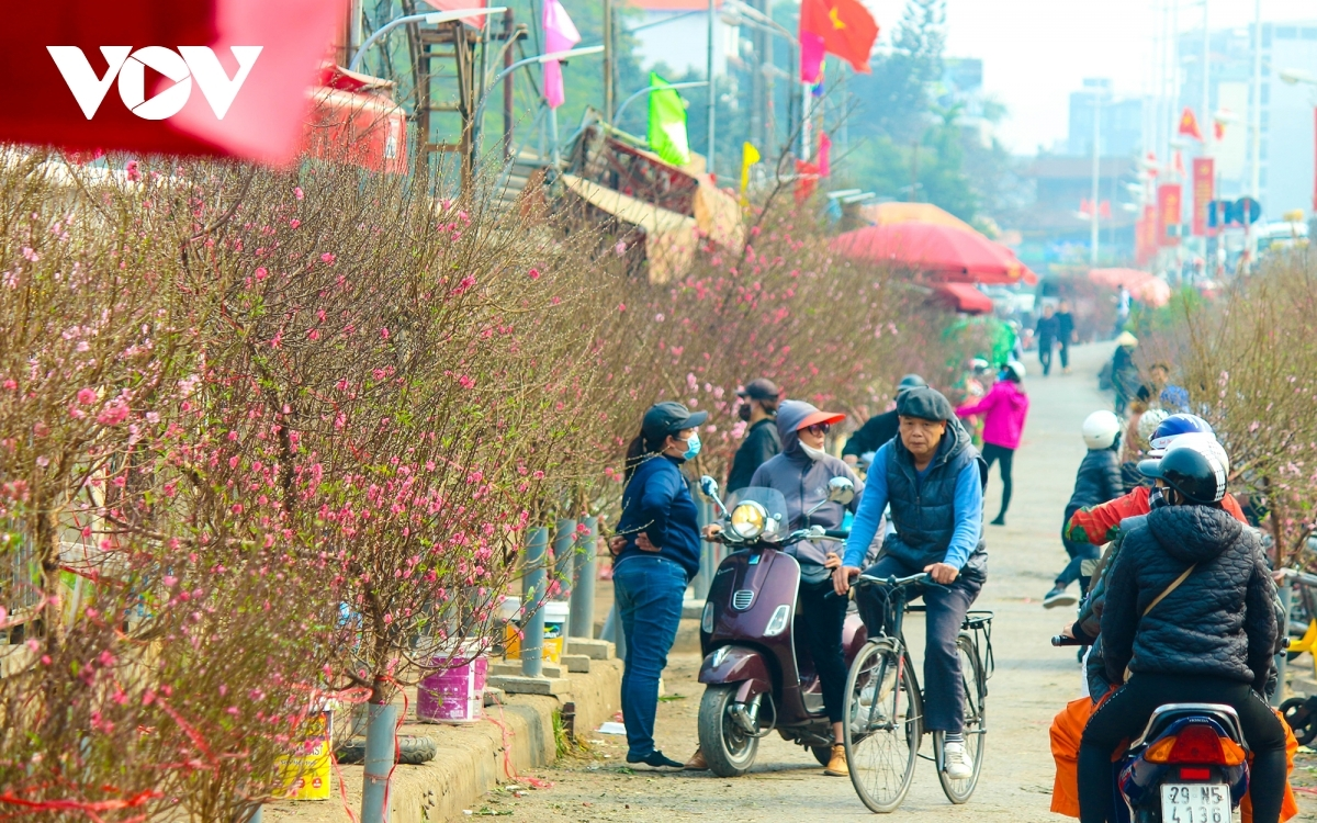 Coming to the market, visitors seem to get lost in a forest of peach flowers which are indispensable during the long Tet holiday for Vietnamese people, especially those living in the northern region.
