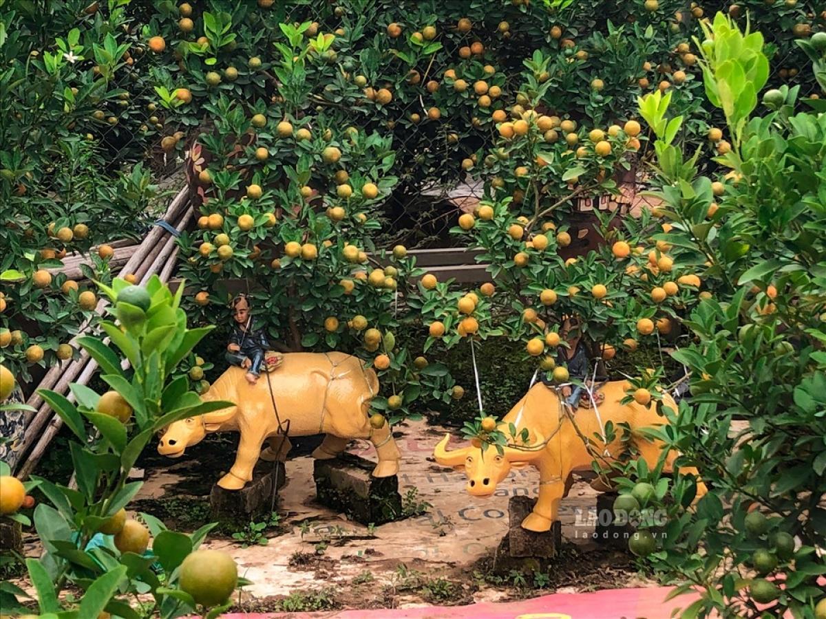 Tại làng nghề Tứ Liên (Hà Nội), người dân nơi đây đang bận rộn với công việc chăm sóc những cây quất bonsai để phục vụ nhu cầu trưng Tết.