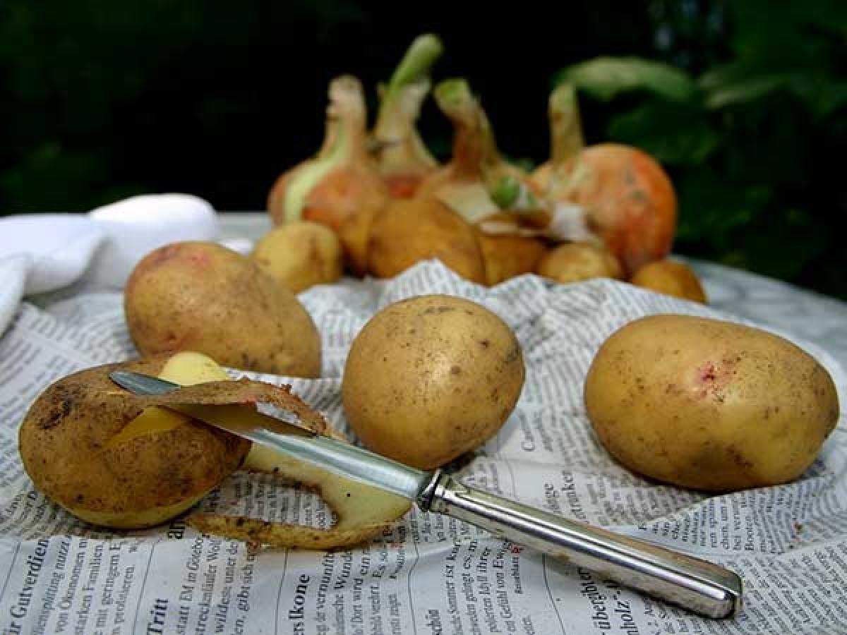 Khoai tây: Giống như cơm, khoai tây nấu chín cũng không nên được bảo quản ở nhiệt độ phòng vì chúng rất dễ nhiễm khuẩn. Bạn cũng không nên làm nóng lại khoai tây vì việc này có thể gây hại cho cơ thể khi ăn vào.