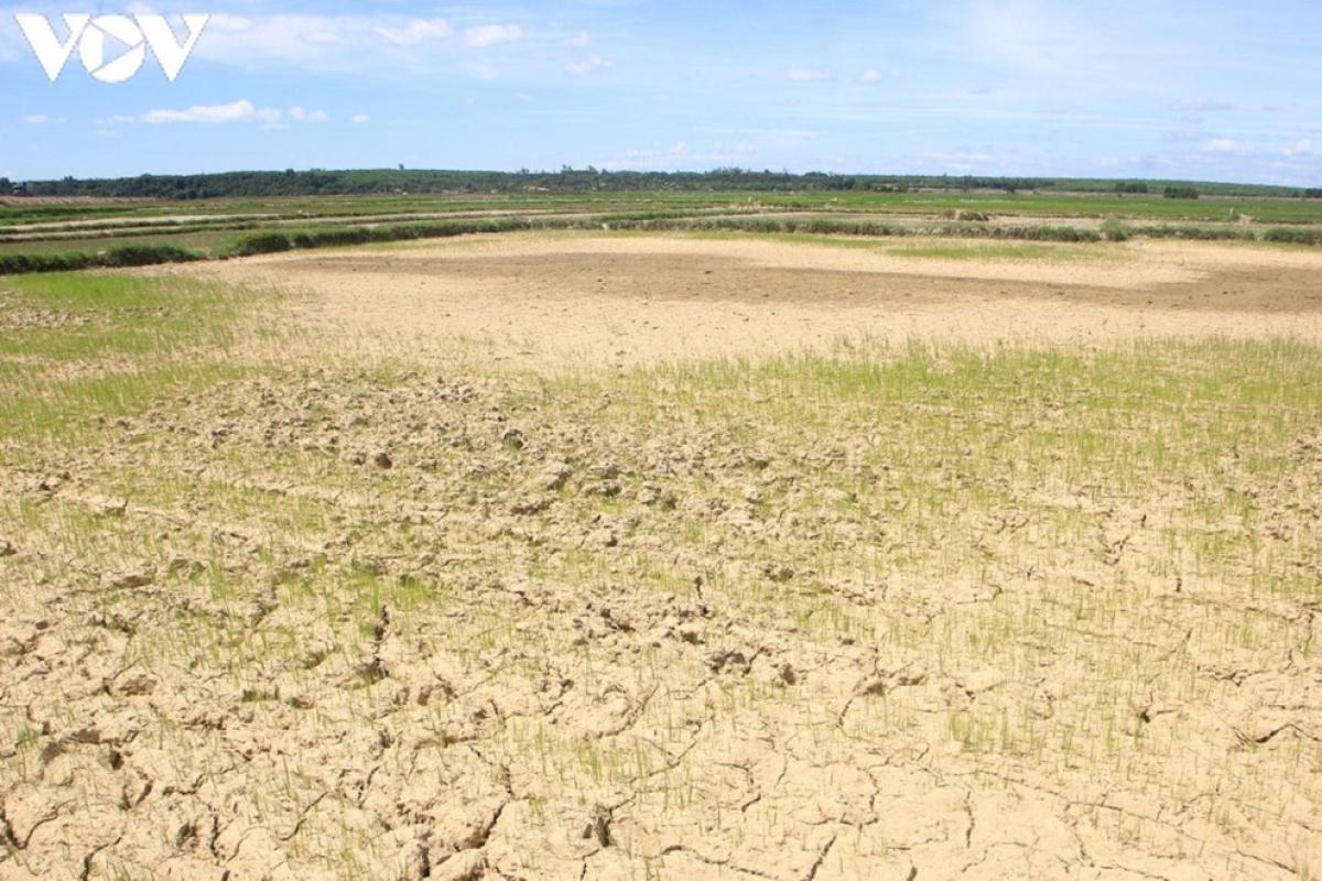 Việt Nam phải đối mặt với tình trạng thiếu hụt nguồn nước, hạn mặn gay gắt trong năm 2021.