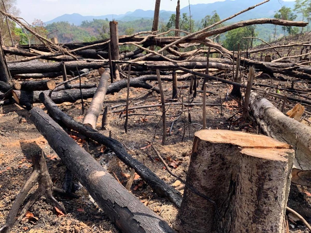 Rừng của Công ty Lâm nghiệp Ea Kar bị phá tan hoang.