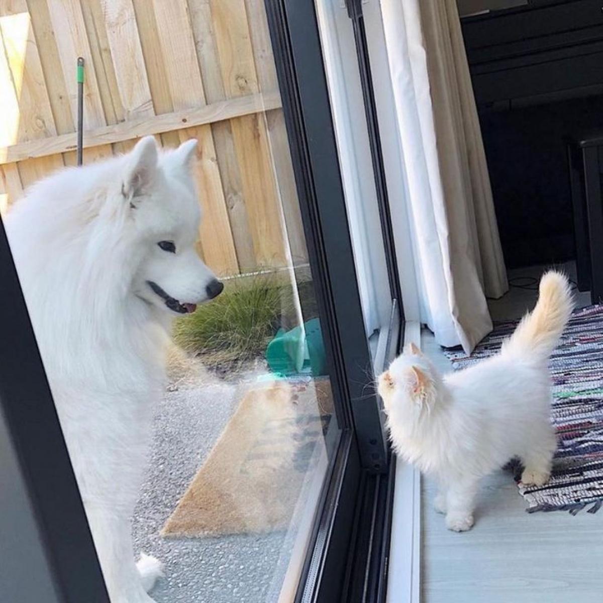 Chú chó Casper và chú mèo Romeo gắn bó với nhau ngay từ lần đầu gặp gỡ.