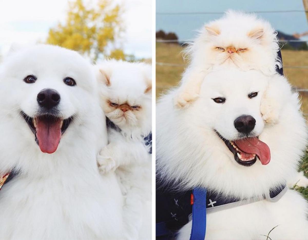 Chú chó Casper và chú mèo Romeo đã ở bên nhau được 2 năm. Mặc dù ngoại hình và tính cách khác nhau nhưng tình bạn của chúng vô cùng ngọt ngào và đáng yêu.