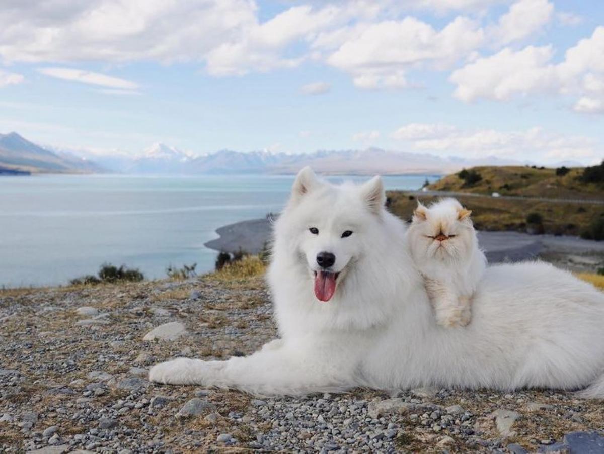 Hai người bạn này cũng thích tạo dáng chụp ảnh mặc dù sự trái ngược về biểu cảm của chúng khiến bất kỳ ai cũng phải bật cười.