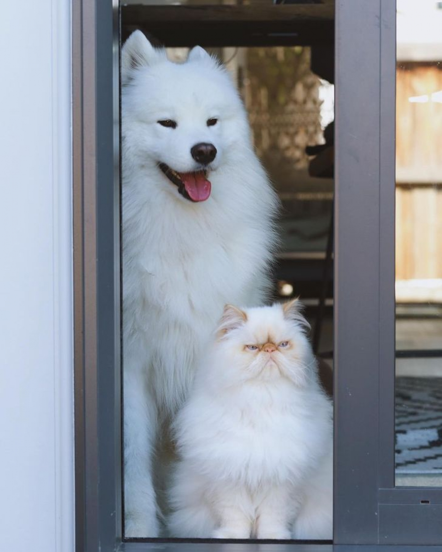 """Trong khi Romeo lúc nào cũng có vẻ """"cau có"""" thì Casper luôn vui vẻ và hào hứng. Dù vậy, chúng vẫn đem tới cảm giác hòa hợp và yên bình giữa 2 người bạn """"hiểu nhau""""."""