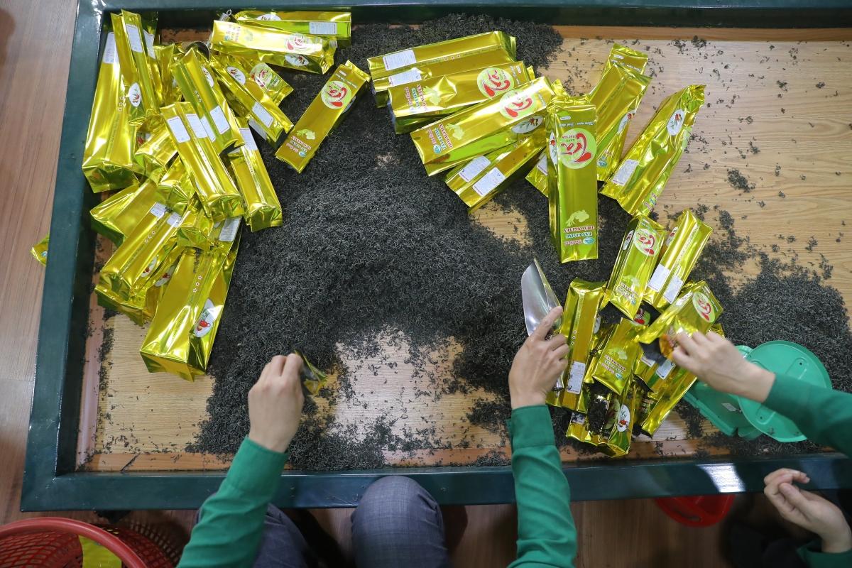 Nhiều cơ sở tại Tân Cương đón khách tới tham quan, trải nghiệm quy trình sản xuất chè. Nguồn: Minh Khánh